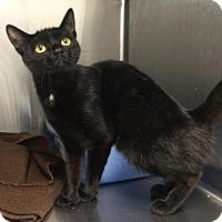 Adopt A Pet :: Buffy - Webster, MA