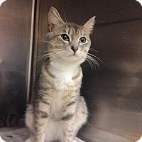 Adopt A Pet :: Ash - East Brunswick, NJ