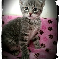 Adopt A Pet :: Doodlebug - Richmond, VA