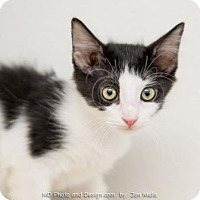 Adopt A Pet :: Willow - Fountain Hills, AZ