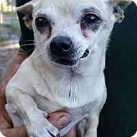 Adopt A Pet :: Maddox - Gainesville, FL