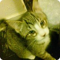 Adopt A Pet :: Gabby - Woodland, CA