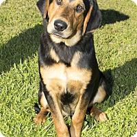 Adopt A Pet :: Lenny Kravitz - Jersey City, NJ