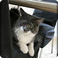 Adopt A Pet :: Hampsty - Spring, TX