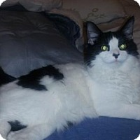 Adopt A Pet :: NJ - Maisy - Blairstown, NJ