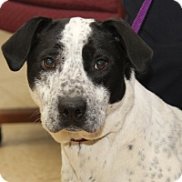 Adopt A Pet :: Layla (Spayed) - Marietta, OH