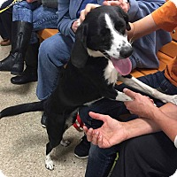 Adopt A Pet :: Katie - Loudonville, NY