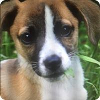Adopt A Pet :: Harvey - Harrisonburg, VA
