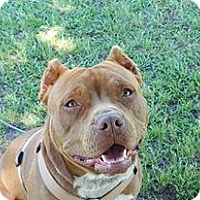 Adopt A Pet :: Hercules - Albany, NY