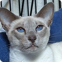 Adopt A Pet :: Heloise V - Sacramento, CA
