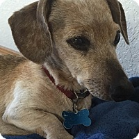 Adopt A Pet :: RUSTY - Portland, OR