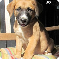 Adopt A Pet :: Sally Jo (Puppy) - Lindsay, CA