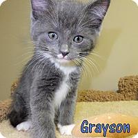 Adopt A Pet :: Grayson - Creston, BC