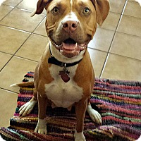 Adopt A Pet :: Claire - Yuba City, CA