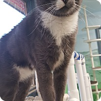 Adopt A Pet :: Herman - Cody, WY