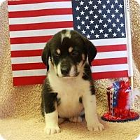 Adopt A Pet :: Betsy - Salem, NH