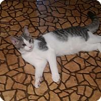 Adopt A Pet :: Maxx - Colmar, PA
