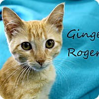 Adopt A Pet :: Ginger Rogers - Wichita Falls, TX