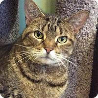 Adopt A Pet :: Daisy - Breinigsville, PA