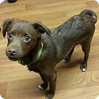 Adopt A Pet :: Fudgy - Lisbon, OH