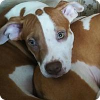 Adopt A Pet :: Mosiah - Jerseyville, IL
