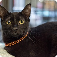 Adopt A Pet :: Clarisse - New York, NY