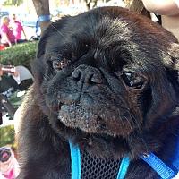 Adopt A Pet :: Rolex - Grapevine, TX