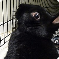 Adopt A Pet :: Wilma - Fall River, MA