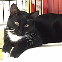 Adopt A Pet :: Paulie - Topeka, KS