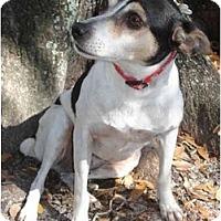Adopt A Pet :: Miz Sophie - Jacksonville, FL