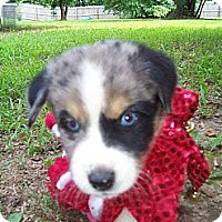 Adopt A Pet :: Patch - Lexington, TN