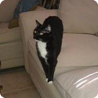 Adopt A Pet :: Judy - Bonita Springs, FL