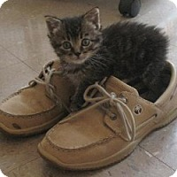 Adopt A Pet :: Bonnie - Omaha, NE