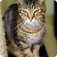 Adopt A Pet :: Jazlyn - Byron Center, MI