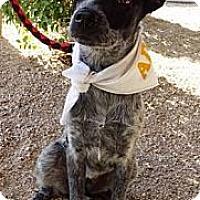 Adopt A Pet :: Sammy - Adopting Pending - Phoenix, AZ