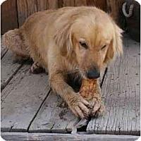 Adopt A Pet :: Maisy - Scottsdale, AZ