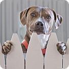 Adopt A Pet :: Gilmore - Courtesy Posting