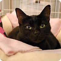 Adopt A Pet :: Sasha - Winchendon, MA