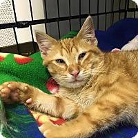Adopt A Pet :: Gideon - Island Park, NY