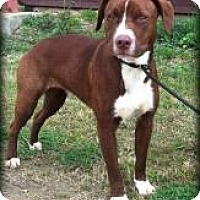 Adopt A Pet :: Sawyer - Rexford, NY