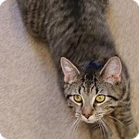 Adopt A Pet :: JACK - Tiffin, OH