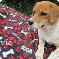 Adopt A Pet :: Evie - Bartonsville, PA