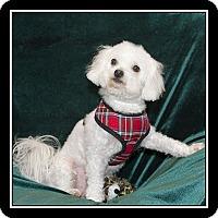 Adopt A Pet :: Rheba - San Diego, CA