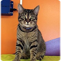 Adopt A Pet :: Rian - Welland, ON