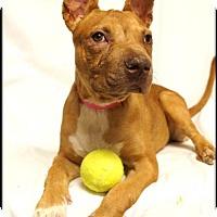 Adopt A Pet :: Teagan - Simi Valley, CA