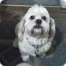 Adopt A Pet :: Coco