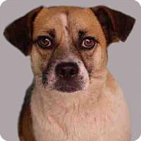 Adopt A Pet :: Gretal - Orlando, FL