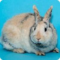 Adopt A Pet :: Maddie - Whittaker, MI