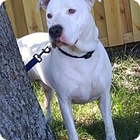 Adopt A Pet :: Bones - West Warwick, RI