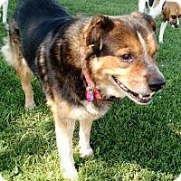 Adopt A Pet :: Rover - Macomb, IL